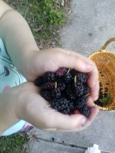 Mulberries in Greensboro