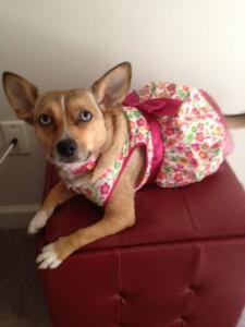 Roxie Birthday Dress